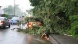 В результаті негоди в Києві 70 дерев повалило